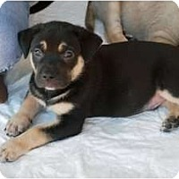 Adopt A Pet :: Max - Minneola, FL