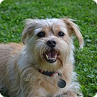 Adopt A Pet :: Jake ~ Adopted - Troy, OH