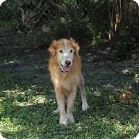 Adopt A Pet :: Harry - Murdock, FL