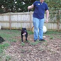 Adopt A Pet :: Backster - Inman, SC