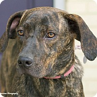 Adopt A Pet :: Gracie - Knoxville, TN