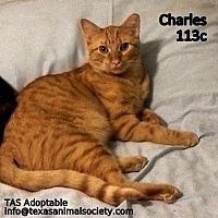 Adopt A Pet :: Charles - Spring, TX