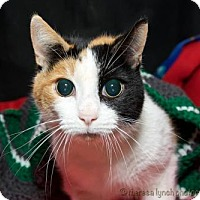 Adopt A Pet :: Spirit - Satellite Beach, FL
