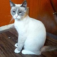 Adopt A Pet :: Jada II - Austin, TX