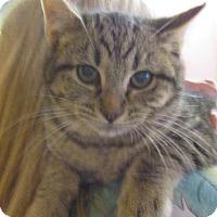 Adopt A Pet :: Bean - Reeds Spring, MO
