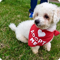 Adopt A Pet :: Barney - Silver Spring, MD