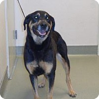 Adopt A Pet :: Sheba - Wildomar, CA