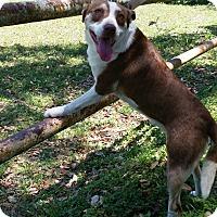 Adopt A Pet :: Gabby - Simsbury, CT