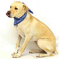 Adopt A Pet :: JAX - Sanford, FL