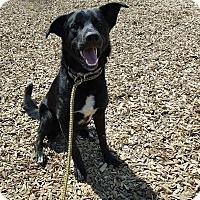 Adopt A Pet :: Jake - Hawk Point, MO