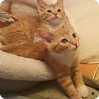 Adopt A Pet :: Skylar & Flynne - Bensalem, PA