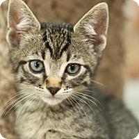 Adopt A Pet :: Scarlett - Great Falls, MT