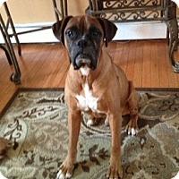 Adopt A Pet :: JJ - Sunderland, MA