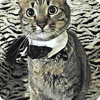 Adopt A Pet :: Shariff - Davis, CA