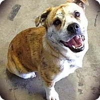 Adopt A Pet :: Lilly - Charlotte, NC