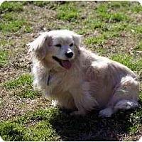 Adopt A Pet :: Missy - Washington, NC