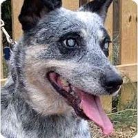 Adopt A Pet :: Sheila - Siler City, NC