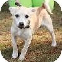 Adopt A Pet :: Mario - Staunton, VA