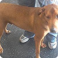 Adopt A Pet :: George - Bedford, TX
