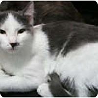 Adopt A Pet :: Lace - Anchorage, AK