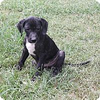 Adopt A Pet :: Heath-PENDING! - Marion, AR
