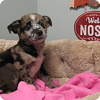 Adopt A Pet :: Afton - Groton, MA