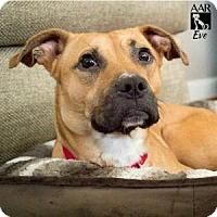 Adopt A Pet :: EVE - Tomball, TX