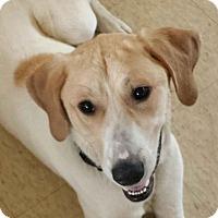 Adopt A Pet :: Julia - LaGrange, KY