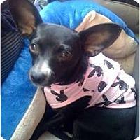 Adopt A Pet :: Lisa - Fowler, CA