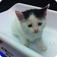 Adopt A Pet :: Linden - Secaucus, NJ