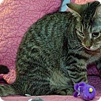 Adopt A Pet :: Jewel - Alexandria, VA