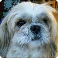 Adopt A Pet :: Tiny Tim-NJ - Mays Landing, NJ
