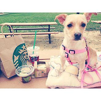 Chihuahua Mix Dog for adoption in Dublin, California - Lola