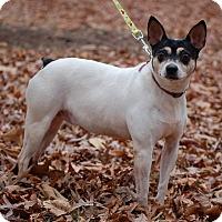 Adopt A Pet :: Bella - Carmel, IN
