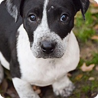 Adopt A Pet :: Hollywood - DFW, TX