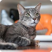 Adopt A Pet :: Charles - Houston, TX