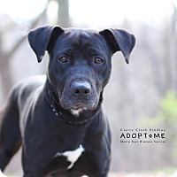 Adopt A Pet :: Roady - Edwardsville, IL