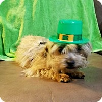 Adopt A Pet :: Yap - Savannah, GA