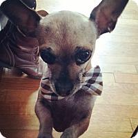 Adopt A Pet :: Pepito - Los Angeles, CA