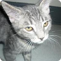 Adopt A Pet :: Liam - Milwaukee, WI