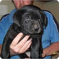 Adopt A Pet :: Patricia - Glastonbury, CT