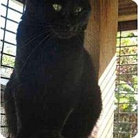 Adopt A Pet :: Peggy - Lunenburg, MA