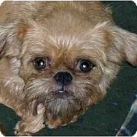 Adopt A Pet :: Miss Mattie in Madison, WI. - Sun Prairie, WI