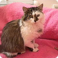 Adopt A Pet :: Chipmunk - St. Paul, MN