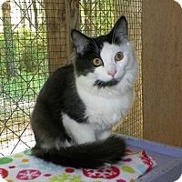 Adopt A Pet :: Fantom - Dover, OH