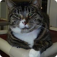 Adopt A Pet :: Lilly Mae - Hamburg, NY