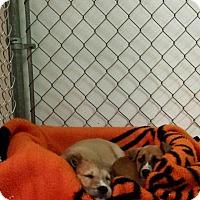 Adopt A Pet :: Brie - Scottsdale, AZ