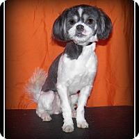 Adopt A Pet :: Millie - Indian Trail, NC