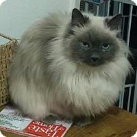 Adopt A Pet :: Misty - Davis, CA