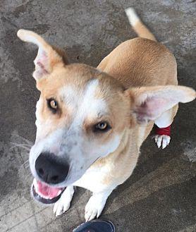 Shepherd (Unknown Type) Mix Dog for adoption in Fresno, California - Marky